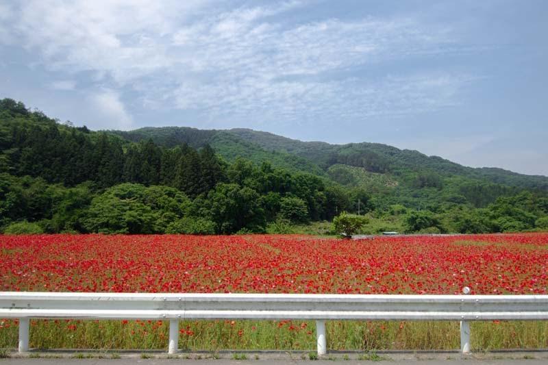why tour in saitama ep2 07