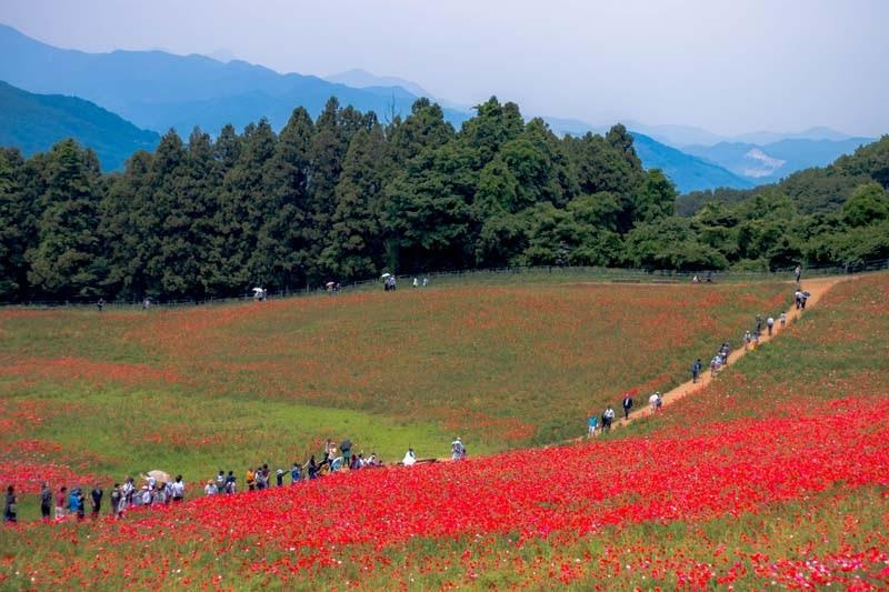 why tour in saitama ep2 14