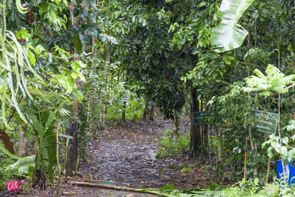 ranong chumphon rainy season trip112
