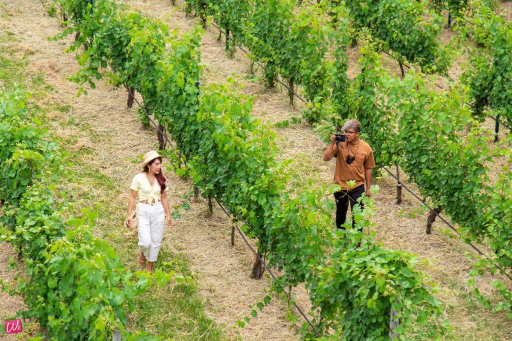ไร่องุ่นกรานมอนเต้ Granmonte Vineyard Wines1