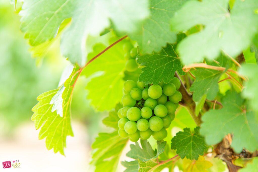 ไร่องุ่นกรานมอนเต้ Granmonte Vineyard Wines2